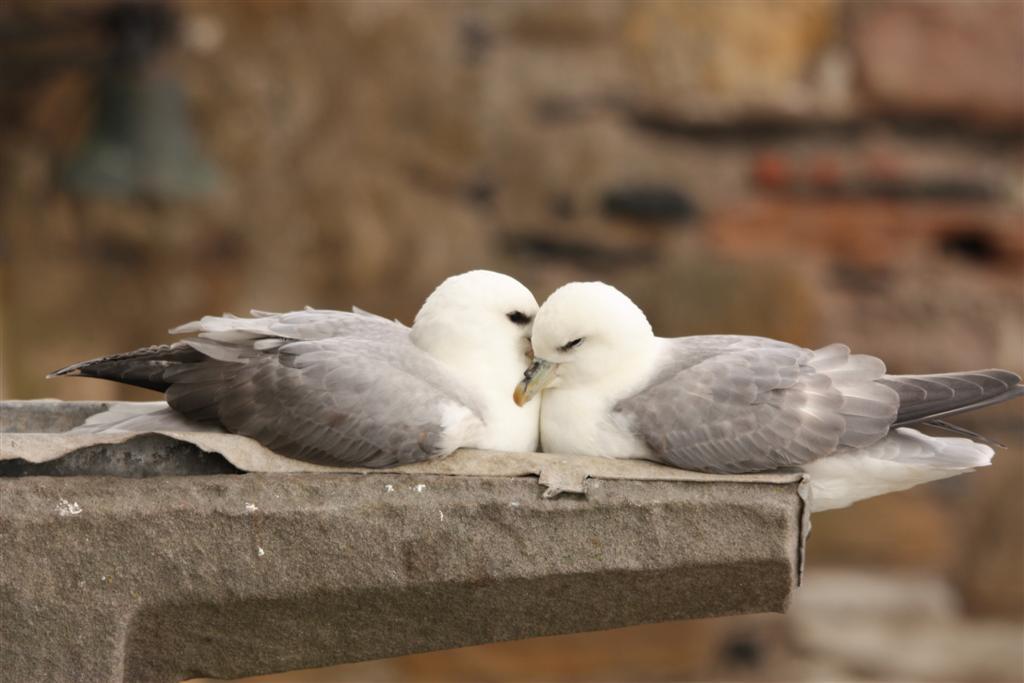 The Sad Delusions of Love