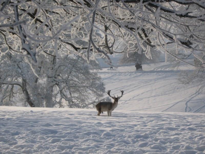 Midas in Winter